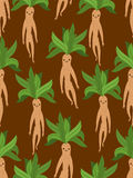 Mandrake root seamless pattern. Legendary mystical plant in form Stock Image