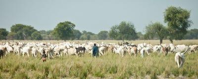 Mandriani del bestiame, Sudan del sud Fotografia Stock