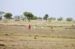 Mandriano africano del bestiame - Tanzania Fotografia Stock