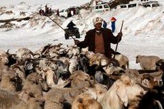 Mandriano con le capre sopra neve, India Immagini Stock