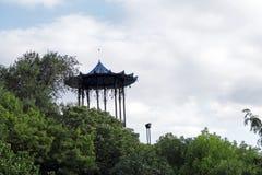 Mandril chinês em Pyatigorsk, a montanha de Mashuk Fotos de Stock