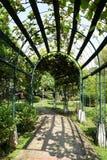 Mandril com caminhada arbored fotografia de stock royalty free