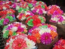 Mandril da flor do arco-íris Fotos de Stock Royalty Free