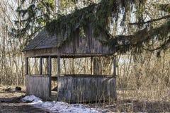 Mandril de madeira entre árvores na natureza brilhante imagem de stock royalty free