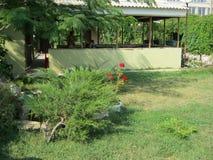 Mandril de pedra em um setor privado com vegetação verde fotografia de stock royalty free