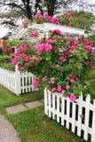 Mandril de Rosa Imagem de Stock