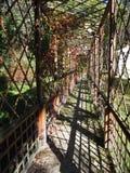 Mandril em um jardim fotografia de stock royalty free