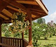 Mandril em um jardim. Fotografia de Stock Royalty Free