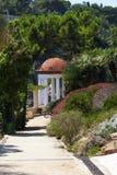 Mandril em um jardim no mediterrâneo foto de stock royalty free