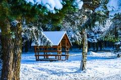 Mandril em uma floresta coberto de neve do inverno imagem de stock