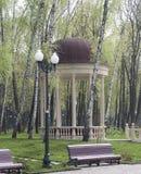 Mandril entre as árvores, os bancos e as lanternas de vidoeiro Fotografia de Stock