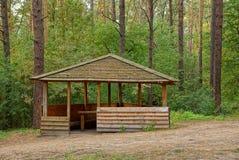 Mandril marrom de madeira em um esclarecimento em uma floresta do pinho Fotografia de Stock Royalty Free