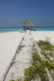 Mandril na praia de Maldivas Fotografia de Stock