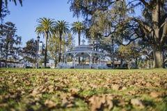 Mandril no parque da cidade do templo imagem de stock royalty free