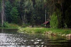 Mandril no rio perto do lugar da floresta A para que os turistas relaxem imagens de stock