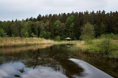 Mandril no rio perto do lugar da floresta A para que os turistas relaxem foto de stock
