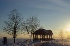 Mandril perto de um Lago Ontário congelado fotografia de stock
