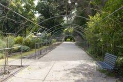 Mandril quadro metal, Adelaide Botanic Garden fotografia de stock royalty free