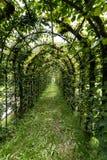 Mandril verde frondoso por muito tempo arqueado em um jardim Fotografia de Stock Royalty Free