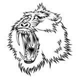 mandrill illustration stock