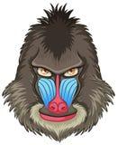 Mandrill baboon. Illustration of a mandrill baboon head Royalty Free Stock Image