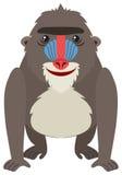 Mandrill baboon on white background. Illustration Stock Images