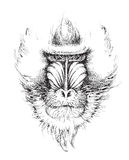 Mandrill, dessin de main Image stock