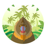 Mandrill on the Jungle Background. Flat Vector image of the Mandrill on the Jungle Background Royalty Free Stock Image