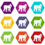 Mandrill monkey icon set color hexahedron. Mandrill monkey icon set many color hexahedron isolated on white vector illustration Stock Images