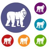 Mandrill monkey icons set. In flat circle red, blue and green color for web Stock Images