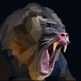 Mandrill. Screaming man of Mandrill Baboon ape Royalty Free Stock Photo