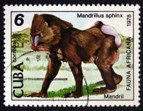 Mandryl - Mandrillus sfinks, znaczek jest od serii około 1978, Obraz Stock