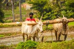 MANDYA, KARNATAKA, INDIA - AUGUSTUS 29.2017: Hier landbouwer het ploegen royalty-vrije stock afbeelding