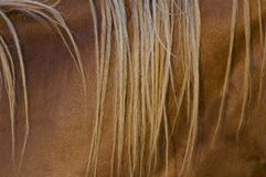 Mane closeup Royalty Free Stock Photos