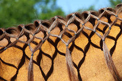 Mane_ del cavallo Fotografie Stock