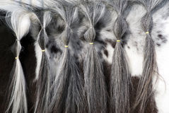 Mane of horse Stock Images