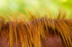 Mane of a horse Stock Photos