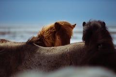 Mane, Horse Like Mammal, Horse, Sky Royalty Free Stock Image