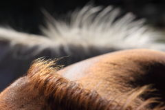 Mane of horses. Manes of 2 horses, one brown and one white Royalty Free Stock Photography