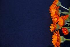 Orange flowers on a black background Stock Image