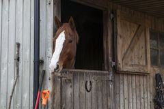 Manege horse in stable Stock Photos