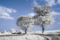 Maneira às árvores Fotografia de Stock Royalty Free