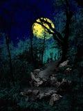 Maneira assustador na floresta da noite com lua Imagem de Stock