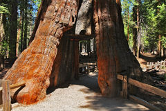Maneira através da árvore Fotos de Stock