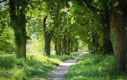Maneira através da avenida árvore-alinhada Foto de Stock Royalty Free