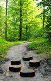 Maneira através da floresta Foto de Stock Royalty Free