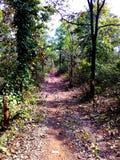 Maneira através da selva, satpura india Imagem de Stock Royalty Free