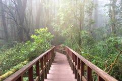 Maneira da caminhada, ponte de madeira à floresta imagens de stock