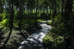 A maneira da floresta Imagens de Stock