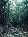 A maneira de andar na floresta Imagens de Stock